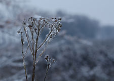 Flower covered with snow Stock Photography