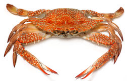 Flower Crab Royalty Free Stock Photo