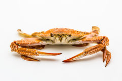 Flower crab or blue crab  on white background. Stock Photos