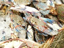 Flower crab at food market Stock Image