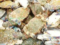 Flower crab at food market Royalty Free Stock Photos