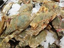 Flower crab at fresh-food market Stock Photo