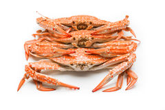 Flower crab steamed isolated on white background Stock Images