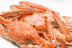 Flower crab steamed isolated on white background Royalty Free Stock Photos