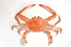 Flower crab Royalty Free Stock Photos