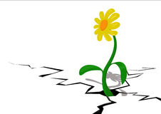 Flower in a crack. Vectorial illustration Royalty Free Stock Images