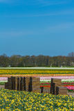 Flower crates in a cultivated flower field Stock Photos