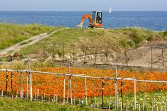 Flower cultivation by the sea, Italy Stock Photography