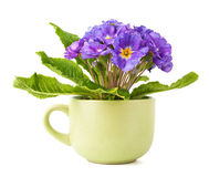 Flower in cup. Beautiful violet flower in big green cup Royalty Free Stock Photos