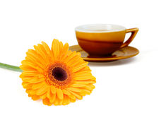 Flower and cup of tea Royalty Free Stock Photo