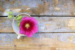Flower in a cup on a wooden background Stock Photography