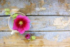 Flower in a cup on a wooden background Stock Photo