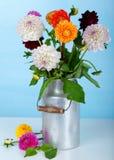 Flower Dahlia Royalty Free Stock Image