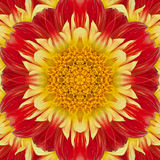 Flower of dahlia. In the form of a picture of a kaleidoscope Royalty Free Stock Photos
