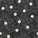 Flower daisies geometry striped  seamless pattern Stock Images