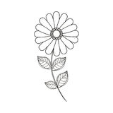 Flower daisy floral decoration line Stock Image