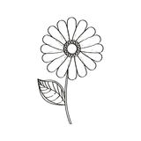 Flower daisy floral decoration sketch Stock Image