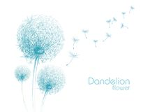 Flower dandelion sketch Royalty Free Stock Image