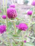 Flower& de vista bonito x28; beauty& natural x29; imagens de stock