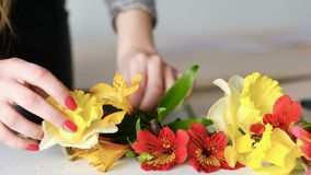 Flower decor floral hobby narcissus alstroemeria. Flower decor business. Creative floral hobby. Woman arranging narcissus and alstroemeria composition stock video
