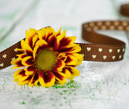Flower decorated with ribbon Royalty Free Stock Image