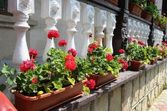Flower decorated terrace of a house Royalty Free Stock Photography
