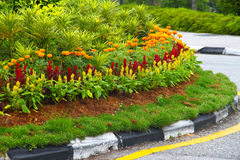 Flower decoration along road curb. Concept of city greenery royalty free stock photos