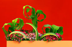 Flower decoration background Stock Image