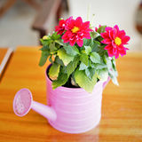 Flower decoration. Flowers in a pink water can used as a table decoration in a cafe Royalty Free Stock Photo