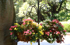 Flower decoration in the park. Decoration of colorful flowers in the park on a sunny day Stock Photography