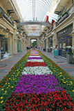 Flower decoration  in  store (GUM). Center of Moscow Stock Images