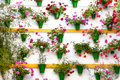 Flower Decoration of  the Wall - Old European Town, Cordoba, Spa Royalty Free Stock Photos