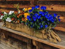 Flower decoration at wooden cottage Stock Image