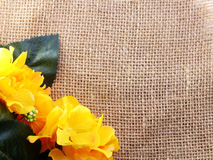 Flower on decorative tablecloth on sacking background space and composition Royalty Free Stock Photos
