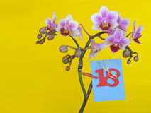 Flower with dedication. Happy birthday card/ Holidays. Greeting card. The 18 anniversary Stock Images