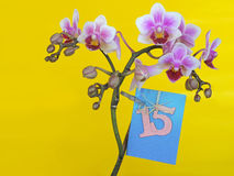 Flower with dedication. Happy birthday card/ Holidays greeting c. Ard. The 15 anniversary Royalty Free Stock Photography