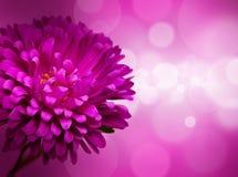 Flower, defocused lights Stock Photos