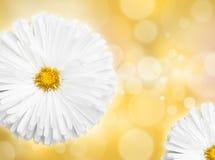 Flower, defocused lights Royalty Free Stock Images