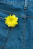 Flower In Denim Royalty Free Stock Photo