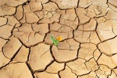 Flower in desert Stock Image