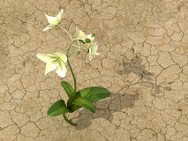 Flower in the desert. 3d generated render of a flower in the desert Stock Images