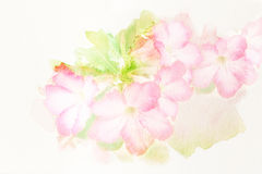 Flower (Desert Rose; Impala Lily; Mock Azalea) watercolor illust Stock Photo