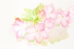 Flower (Desert Rose; Impala Lily; Mock Azalea) watercolor illust Stock Photo
