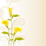 Flower Design Royalty Free Stock Photos