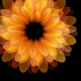 Flower design background Stock Images