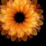 Flower Design Background Stock Images