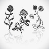 Flower design elements Royalty Free Stock Photos