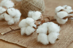 Flower design with fluffy cotton bolls and jute rope hank over r Royalty Free Stock Photos