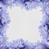 Flower design frame - theme with  flowers Royalty Free Stock Images