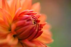 Flower detail. Bokeh Flower detail, macro close up Stock Image